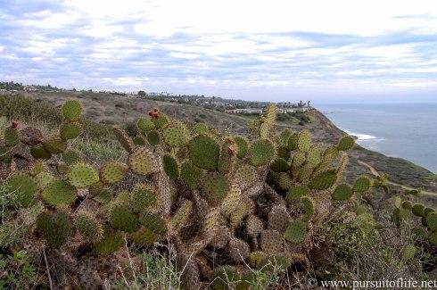 palosverdes9 (1 of 1)