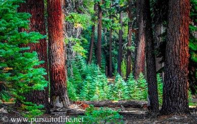 greatforest (1 of 1)