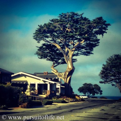 pacificgrove8 (1 of 1)