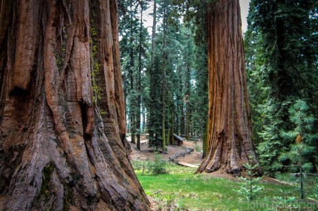 Among Giants: Mariposa Grove
