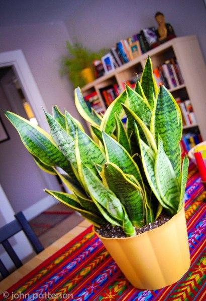 plants (1 of 1)