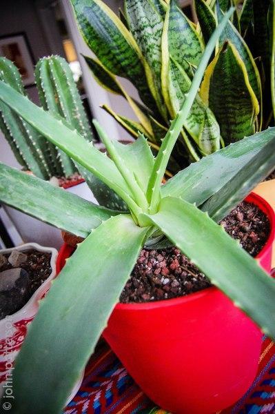 plants2 (1 of 1)
