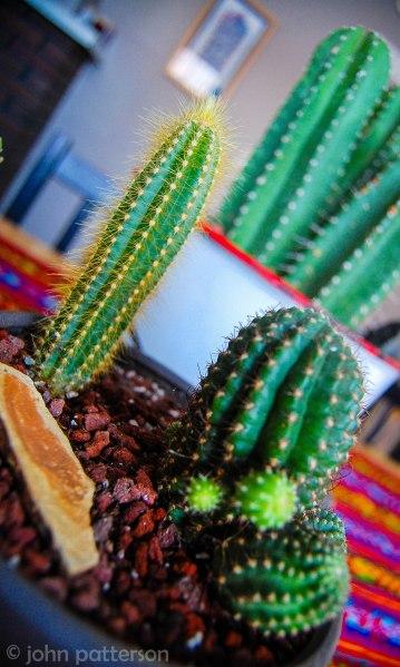 plants7 (1 of 1)