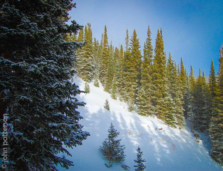 snowforest1-2